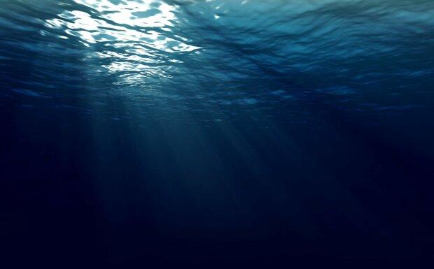 Опасных существ обнаружили в Черном море: поражают легкие и мозг человека