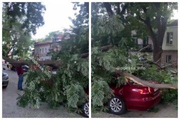 """Нова стихія наробила біди в Одесі, кадри: """"завалилася на машини"""""""
