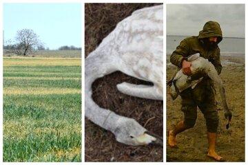 На полях Одещини знаходять тіла паралізованих птахів: кадри і тривожна заява екологів