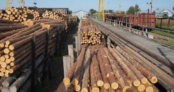 древесина, лес