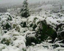 снег, Закарпатье