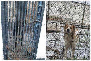 """На Київщині десяток службових собак кинули напризволяще, кадри: """"Запасів їжі майже немає"""""""