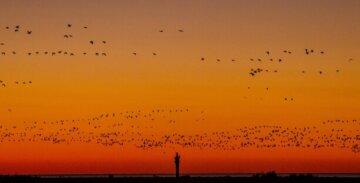 Весна заманила удивительных птиц в Одесскую область: видео показали в сети