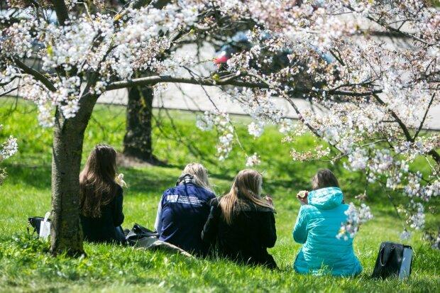 весна, тепло, сонце, квітучі дерева