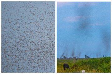 После ливней гигантские тучи насекомых наводнили Одесскую область: фото