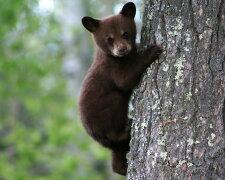 Медведя отправили в космос (фото, видео)