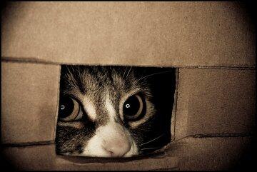 кот кошка