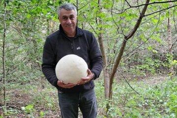 """Комаровський назбирав гриби розміром з футбольний м'яч: """"вони точно їстівні?"""""""