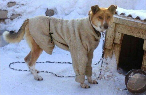 собака, зима, собачья будка, конура