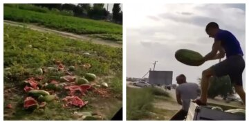 На добрива: фермери знищують урожай кавунів, не можуть продати за 50 коп/1 кг
