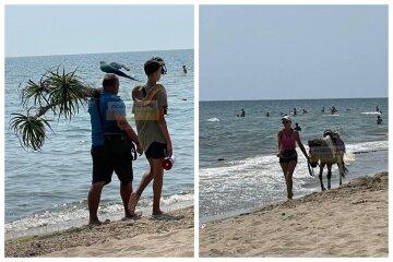 """""""Завязан рот"""": туристы сообщили об издевательствах над животными в Затоке, кадры безобразия"""