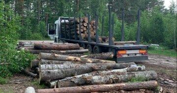 """Андрей Малеваный назвал ответственных за незаконную вырубку лесов: """"Именно они должны оплатить убытки!"""""""
