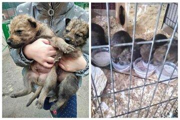 Мать обнюхала и больше не подходила: в одесском зоопарке разыгралась драма с волчатами, видео
