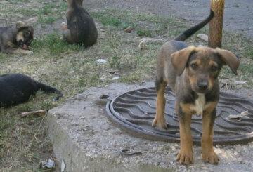 """""""Пострадал от коронавируса"""": в Днепре щенка выбросили на улицу, посчитав заразным"""