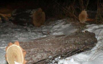 """Банда лісничих вирізала лісу на мільйони гривень на Львівщині, розкрита цинічна схема: """"Реалізовували..."""""""