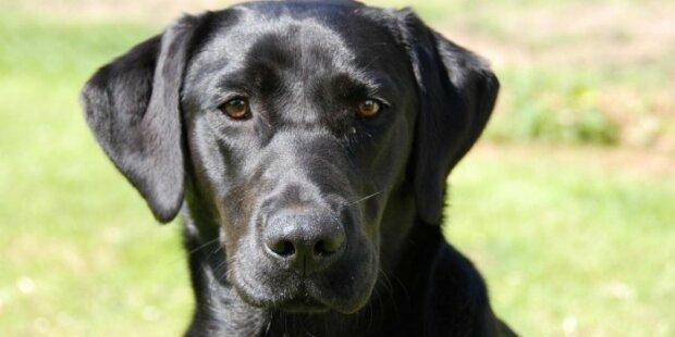 Американские полицейские обучили собаку искать педофилов