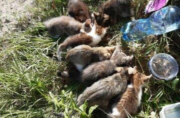 """""""Помогите, вокруг собаки!"""": В Днепре нелюди выбросили на мусорник восемь малышей"""