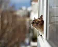 погода весна кот