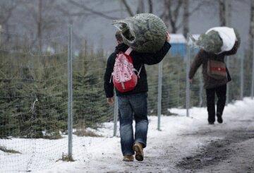 Одесситам готовят вознаграждение за елку: что нужно сделать для сделки
