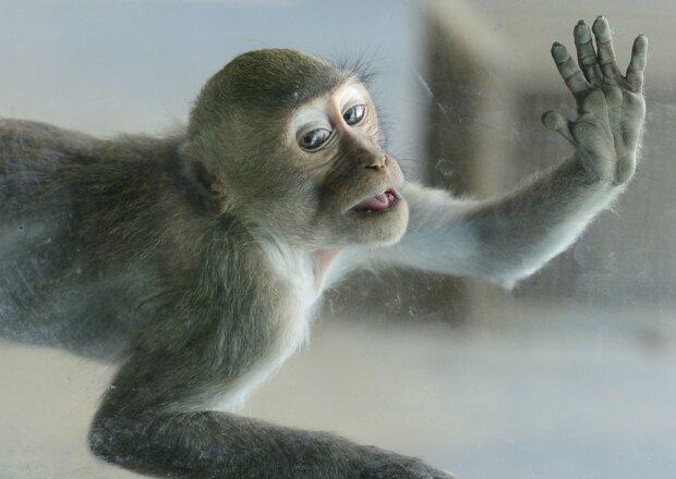 Мавпа паралізувала роботу харківського супермаркету: кадри з місця небувалого переполоху