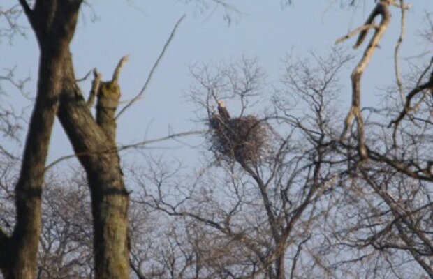 Аномальна зима заманила в Одесу рідкісних птахів, фото краси