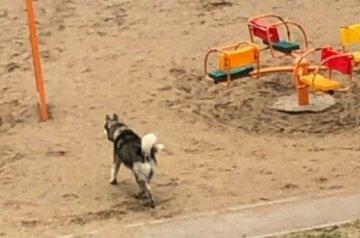 Пес вп'явся у 6-річну дитину на Полтавщині: кадри з місця