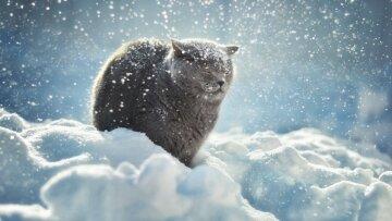 зима снег кот