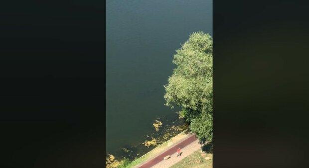 """В Киеве засняли рыбу человеческого роста: """"Вот почему тонут люди в этом озере"""""""