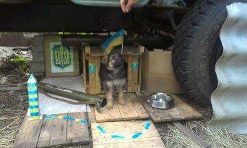 Найменші бойові побратими АТОшників: коти та собаки на передовій (фото)