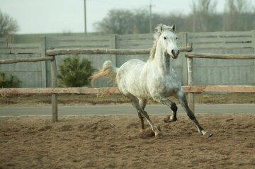 Лошадь конь коневодство