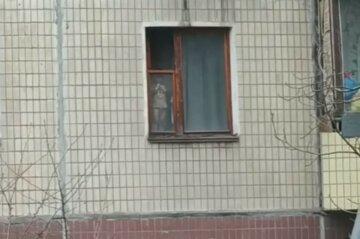 """""""Рік тому вже випадав"""": малюк повис на вікні багатоповерхівки в Кривому Розі, кричуще відео"""