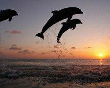 160216103356_dolphins_sunset_624x351_brandoncolenaturepl.com_nocredit