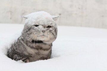 Появились завораживающие фото заснеженных Карпат: «Зимняя сказка таит угрозу»