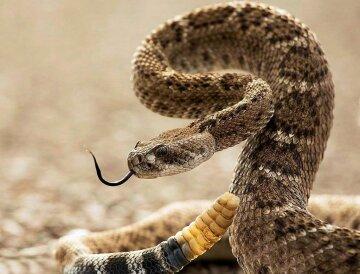 змея змеи