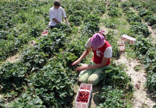 Заробитчан готовят к массовому выселению из Европы: украинцы под угрозой