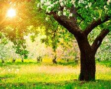 сад весна лето дерево парк
