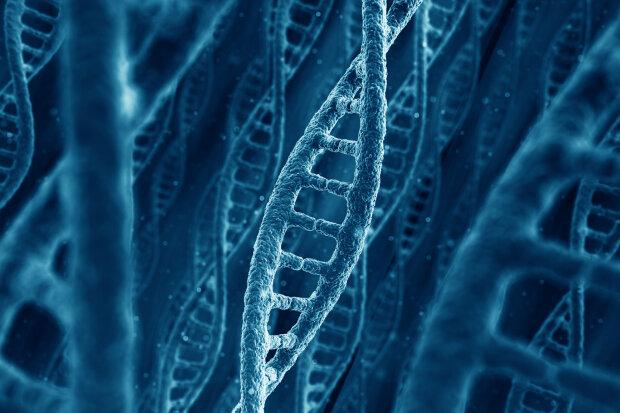 ДНК DNA