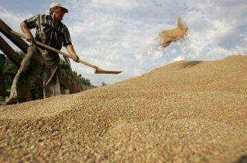пщеница, зерно, экономика