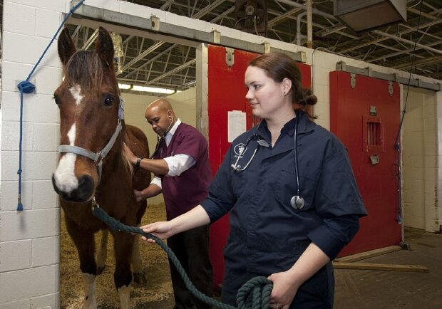ветеринар животное лошадь