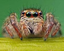 паук, насекомые
