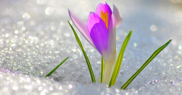 иванов день 9 марта