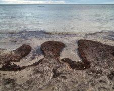 черное море, экологическая катастрофа