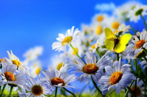 весна цветы лето