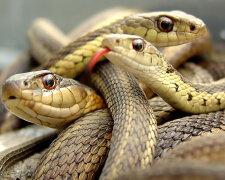 змеи фото