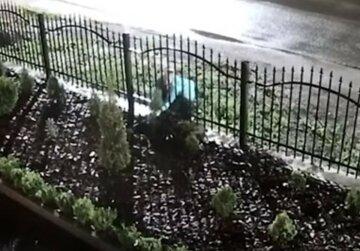 Перехрестилася і пішла: жінка поцупила туї на церковній клумбі, відео