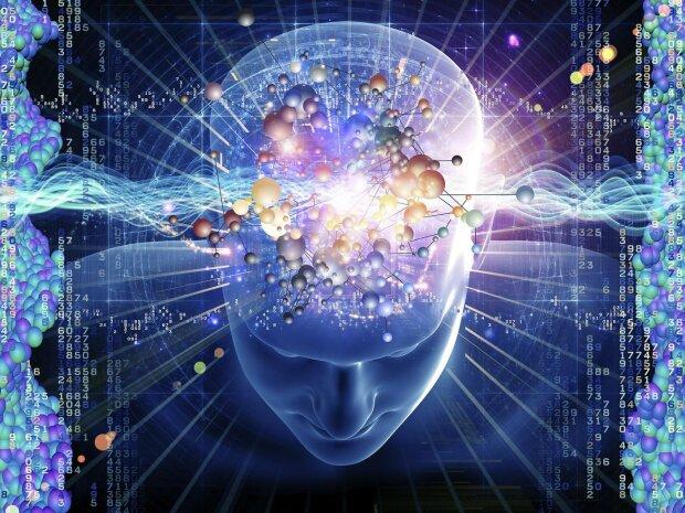 мозг, интеллект