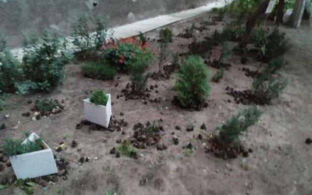 Вирвали з корінням і викинули в сміття: у Дніпрі знищили вічнозелені рослини, кадри
