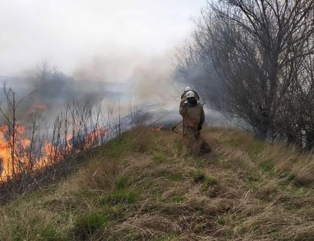 пожар, спасатели, сухая трава, огонь