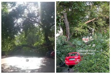 Обвалилось гигантское дерево и перекрыло дорогу в центре Одессы: видео с места ЧП