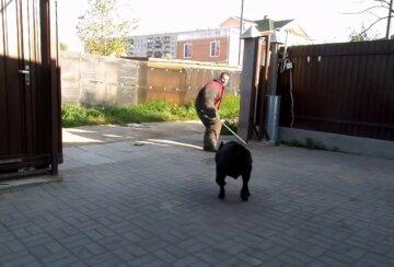 В Харькове неадекват расправился с псом на глазах у школьников, детали: светит 8 лет